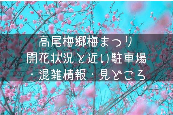 高尾梅郷梅まつり2020開花状況と近い駐車場10件!混雑情報・見どころ