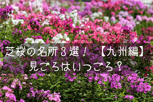 芝桜の名所九州3選!見ごろはいつごろ?