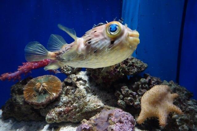 沼津港深海水族館の駐車場情報・混雑情報