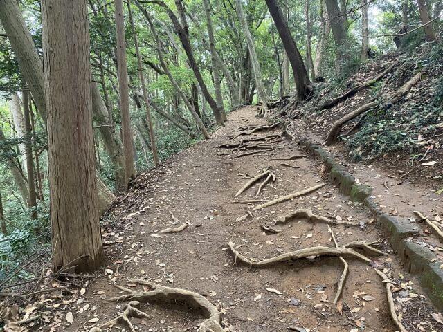 高尾山夜間登山 ナイトハイク